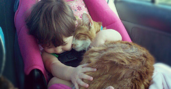 14 Times Cats Proved They Can Be Cuddly And Friendly