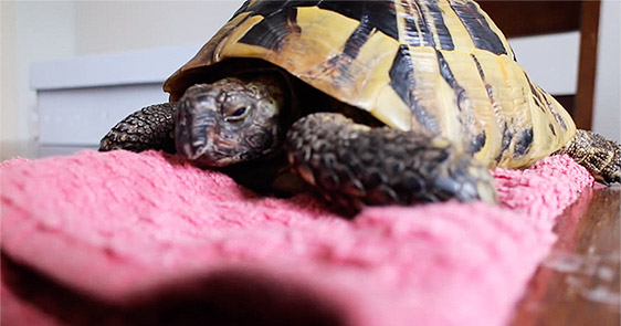 This adorable tortoise just woke up from his hibernation